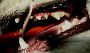 dentalafter2
